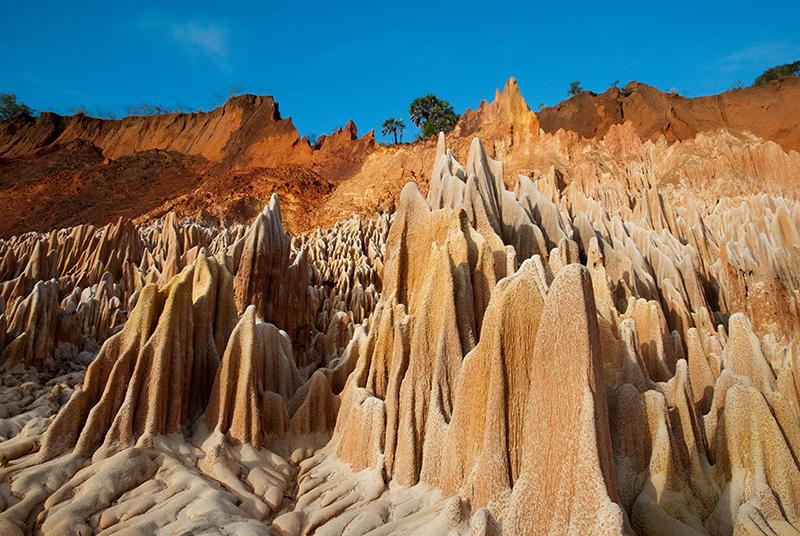 les twinges rouge au nord de Madagascar